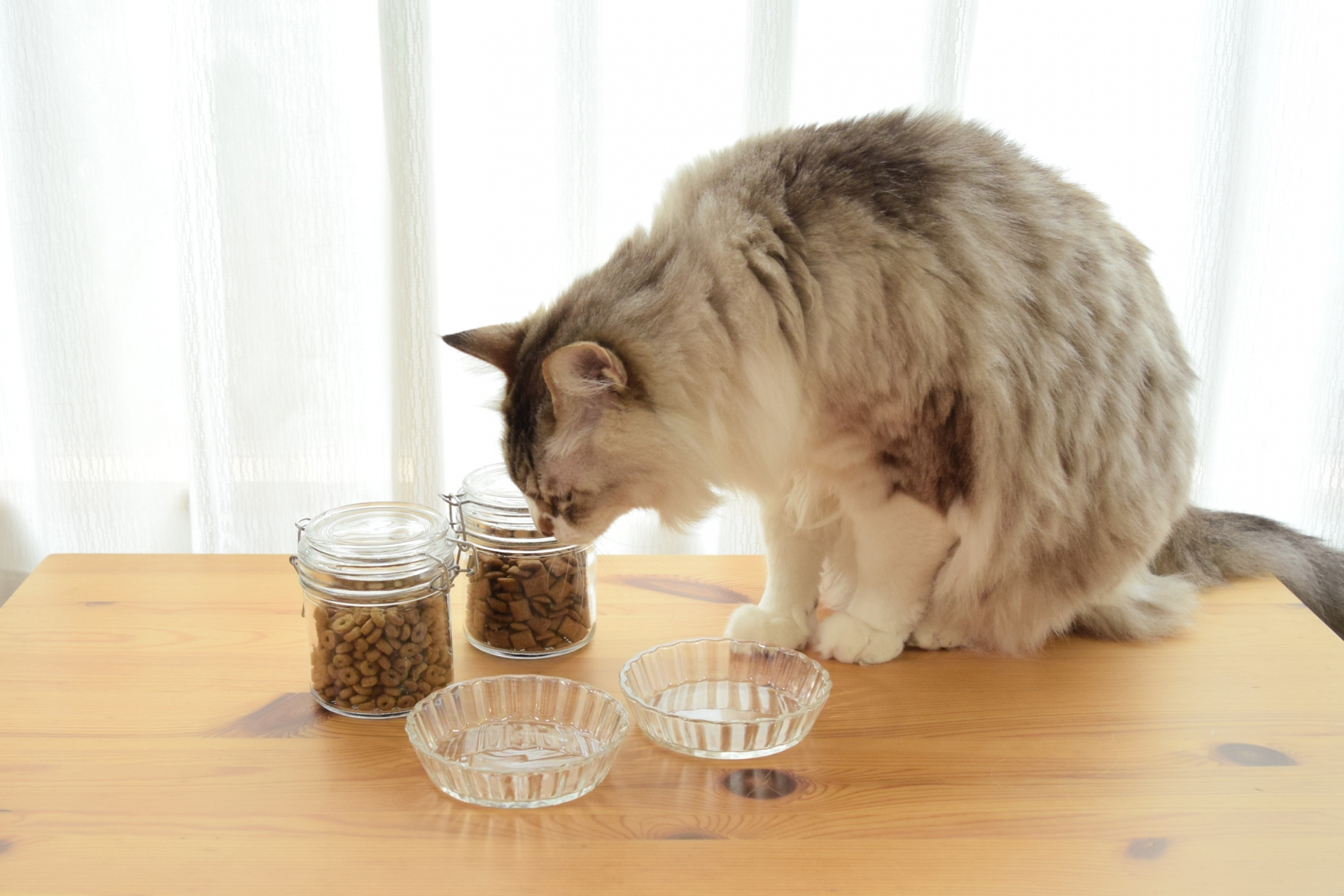 catmeal